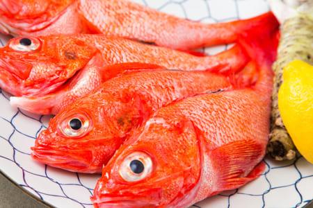 在干煮,盐烤,也推荐的最上等的北海道大翅鮶鮋